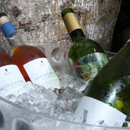 Nelma Canelas, da Agenda do Vinho, promove jantar harmonizado no restaurante Charbon Rouge na Lagoa
