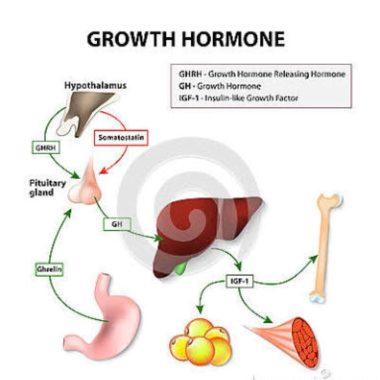 Hormônio do Crescimento por Jessica Zarro
