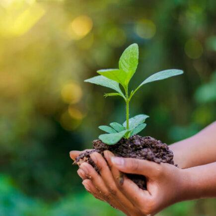 Dia do Meio Ambiente – Empresas que limpam o planeta evitam mais de 207 mil toneladas de embalagens no meio ambiente em um ano